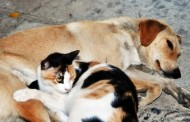 Sokak Hayvanları İçin En İdeal Mama