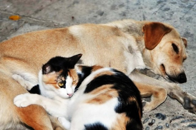 Sokak Köpekleri İçin Ucuz ve Kaliteli Mama