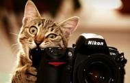 İyi Bir Fotoğrafçı Olmanın Altın Kuralları Nelerdir ?